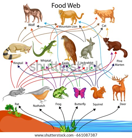 Diagram Of Food Chain Of Animals Auto Wiring Diagram Today