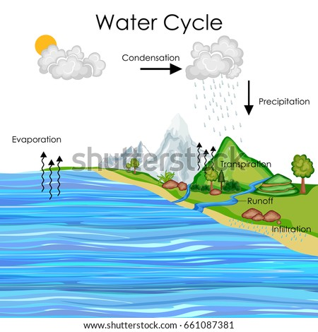 Education chart biology water cycle diagram stock vector hd royalty education chart of biology for water cycle diagram vector illustration ccuart Images
