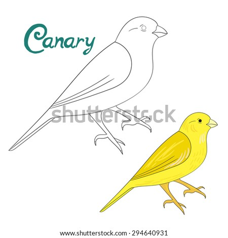 Educational game coloring book canary bird  vector illustration - stock vector