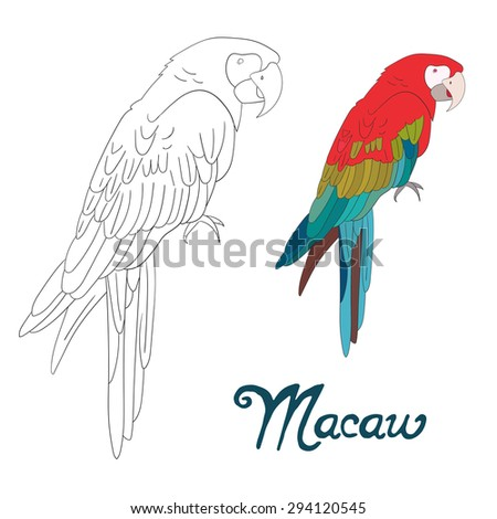 Educational game coloring book macaw bird vector illustration - stock vector
