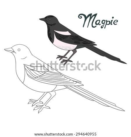 Magpie Vector Stock Images Royalty Free Images Vectors
