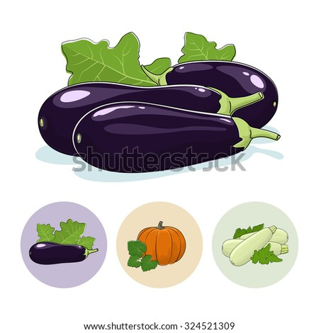 Eggplant Vegetable Isolated on a White Background , Set of Three Round Colorful Icons  Eggplant, Pumpkin, Zucchini, Icons Edible Fruits, Vector Illustration - stock vector