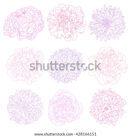 Elegant decorative peony and chrysanthemum flowers, design elements. Floral decorations for vintage wedding invitations, greeting cards, banners, floral backgrounds - stock vector