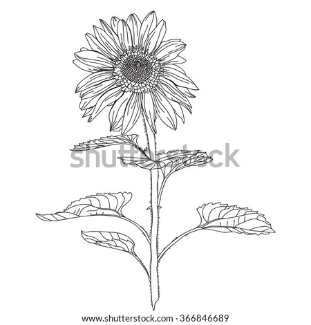 Elegant decorative sunflower, design element. Floral branch. Floral decoration for vintage wedding invitations, greeting cards, banners. - stock vector