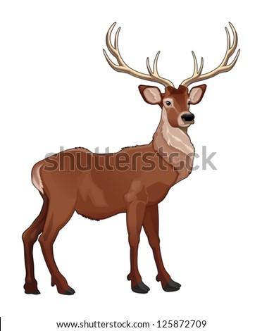 Elegant deer. Vector isolated animal. - stock vector