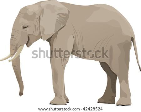 Elephant - stock vector