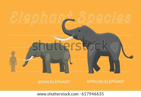Elephant Sizes Comparison Cartoon Vector