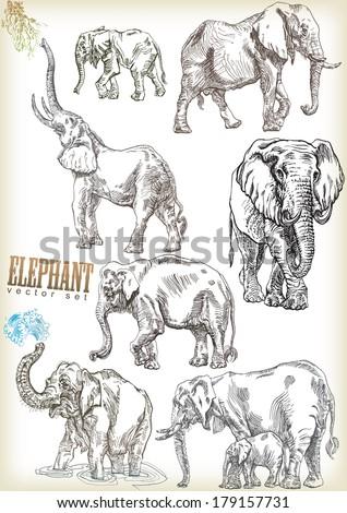 elephant vector sett - stock vector