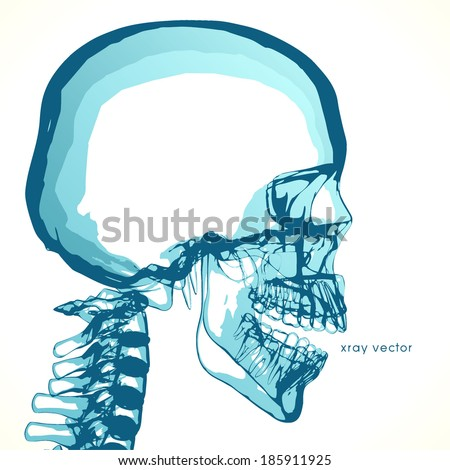 Empty skull, for placing ideas in the head.  - stock vector
