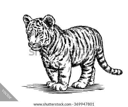 malayan tiger drawing - photo #11