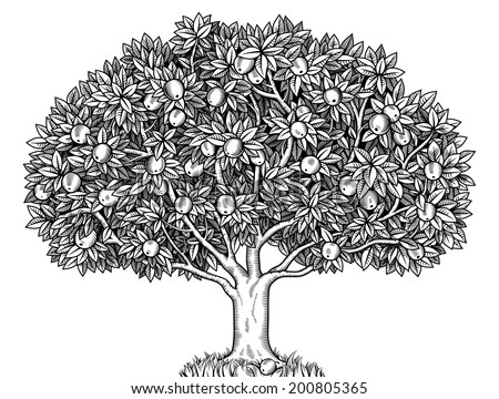 Engraved apple tree full of ripe apples - stock vector