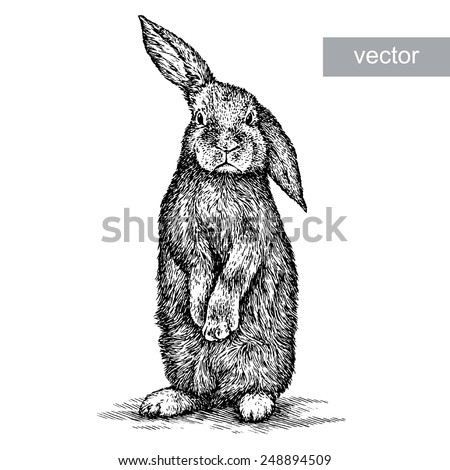 Engraving black and white rabbit. Isolated on white background. - stock vector