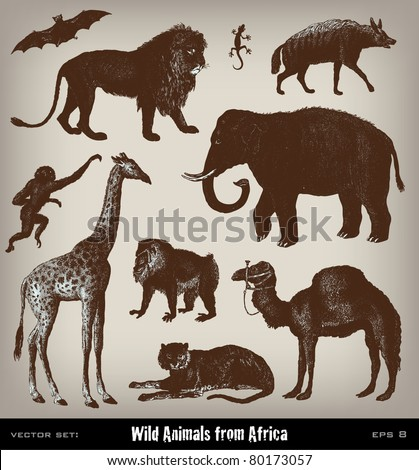 "Engraving vintage African animal set from ""The Complete encyclopedia of illustrations"" containing the illustrations of The iconographic encyclopedia of science, literature and art, 1851. Vector. - stock vector"