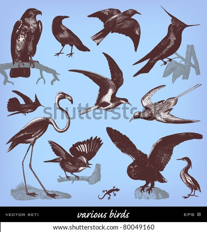 """Engraving vintage bird set from """"The Complete encyclopedia of illustrations"""" containing the original illustrations of The iconographic encyclopedia of science, literature and art, 1851. Vector. - stock vector"""