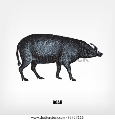 """Engraving vintage Boar from """"The Complete encyclopedia of illustrations"""" containing the original illustrations of The iconographic encyclopedia of science, literature and art, 1851. Vector. - stock vector"""