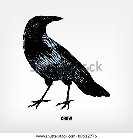 """Engraving vintage crow from """"The Complete encyclopedia of illustrations"""" containing the original illustrations of The iconographic encyclopedia of science, literature and art, 1851. Vector. - stock vector"""