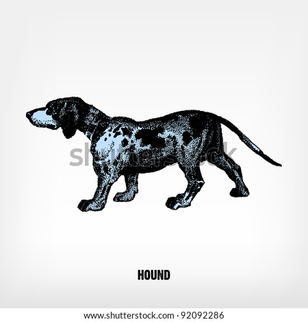 "Engraving vintage Dog Hound from ""The Complete encyclopedia of illustrations"" containing the original illustrations of The iconographic encyclopedia of science, literature and art, 1851. Vector. - stock vector"