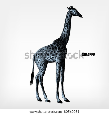 """Engraving vintage giraffe from """"The Complete encyclopedia of illustrations"""" containing the original illustrations of The iconographic encyclopedia of science, literature and art, 1851. Vector. - stock vector"""