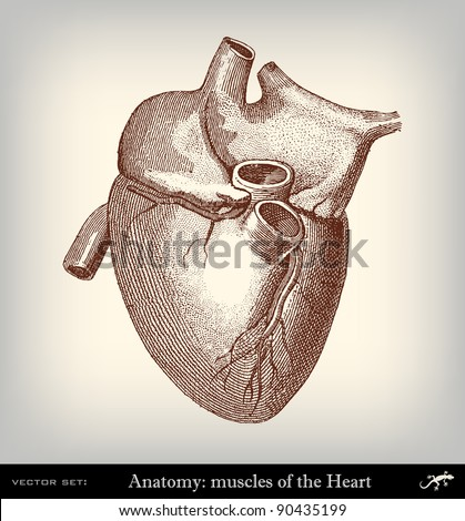 """Engraving vintage heart from """"The Complete encyclopedia of illustrations"""" containing the original illustrations of The iconographic encyclopedia of science, literature and art, 1851. Vector. - stock vector"""