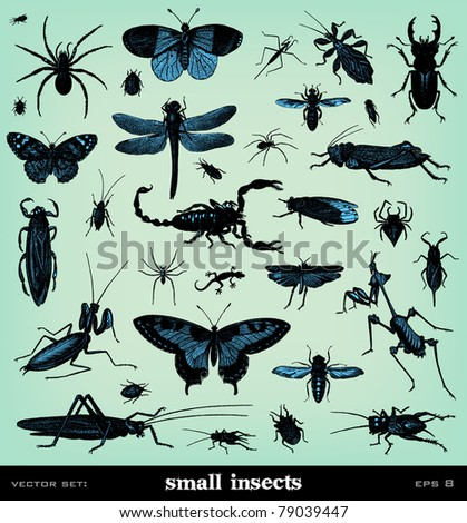"Engraving vintage insect set from ""The Complete encyclopedia of illustrations"" containing the original illustrations of The iconographic encyclopedia of science, literature and art, 1851. Vector. - stock vector"
