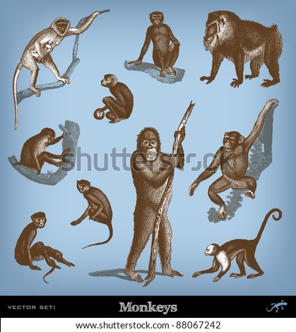 """Engraving vintage Monkeys set from """"The Complete encyclopedia of illustrations"""" containing the original illustrations of The iconographic encyclopedia of science, literature and art, 1851. Vector. - stock vector"""