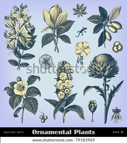"""Engraving vintage plant set from """"The Complete encyclopedia of illustrations"""" containing the original illustrations of The iconographic encyclopedia of science, literature and art, 1851. Vector. - stock vector"""