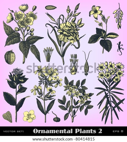 "Engraving vintage plant set from ""The Complete encyclopedia of illustrations"" containing the original illustrations of The iconographic encyclopedia of science, literature and art, 1851. Vector. - stock vector"