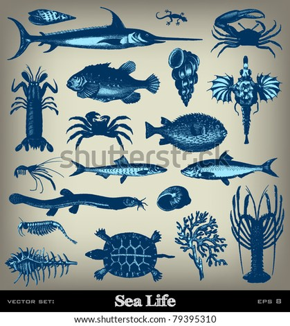 "Engraving vintage sea life set from ""The Complete encyclopedia of illustrations"" containing the original illustrations of The iconographic encyclopedia of science, literature and art, 1851. Vector. - stock vector"