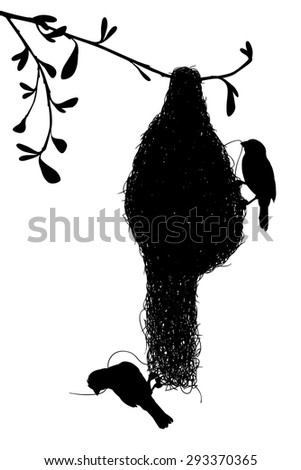 EPS8 editable vector silhouette of a pair of weaverbirds constructing their grass nest with birds as separate objects - stock vector
