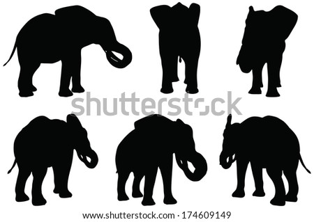 Eps 10 Set of editable vector silhouettes of African elephants in eat poses - stock vector