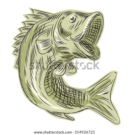 Etching engraving handmade style illustration of a largemouth bass fish viewed from the side set on isolated white background.