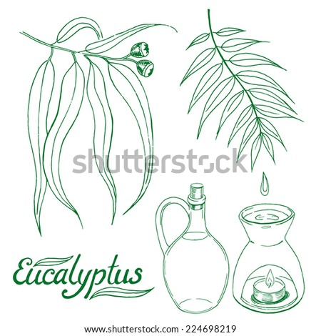 Eucalyptus leaves and branch with glass jar and oil burner. Hand drawn sketch vector set. - stock vector