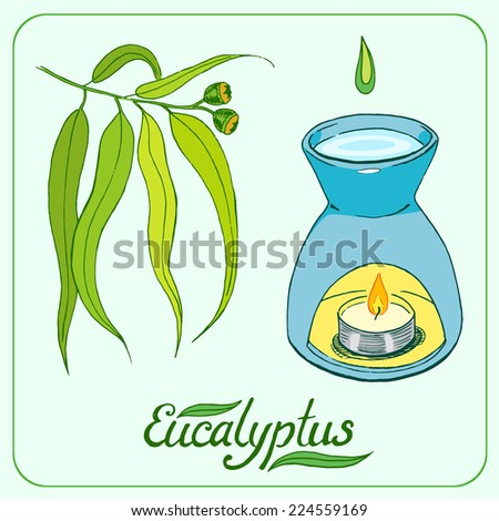Eucalyptus leaves and branch with oil burner hand drawn vector illustration - stock vector