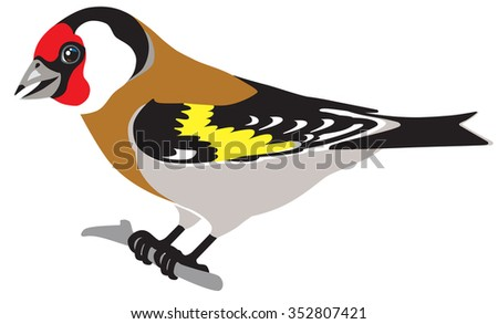 european goldfinch side view isolated image