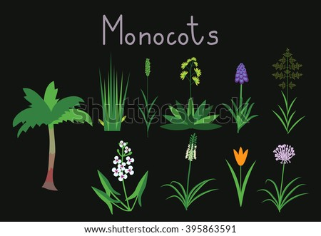 Examples Monocots Plants Collection Stock Photo Photo Vector