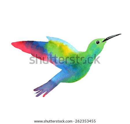 Exotic bird. Sketch of a hummingbird. Watercolor vector illustration - stock vector