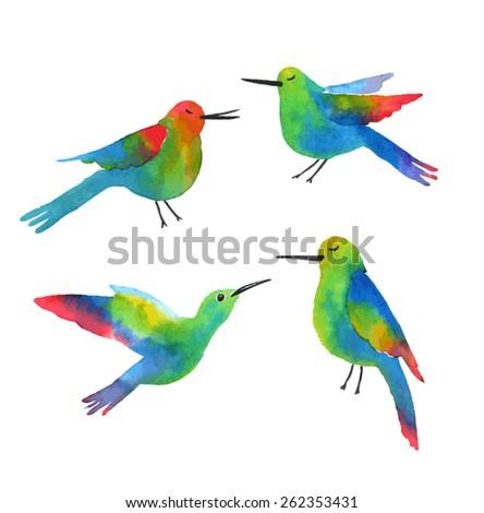 Exotic birds. Sketch of a hummingbird. Watercolor vector illustration - stock vector