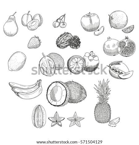exotic fruits set mangosteen durian fruit star fruit carambola grenades kiwano