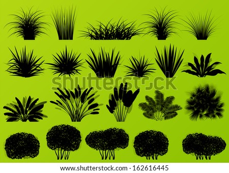 Exotic jungle bushes grass, reed, palm tree wild plants detailed silhouettes illustration collection background vector - stock vector