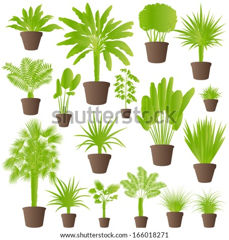 Exotic jungle bushes grass, reed, palm tree wild plants set vector background concept house plants