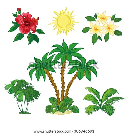 Exotic Set, Sun, Palm Trees, Hibiscus and Plumeria Flowers, Green Plants and Leaves Isolated on White Background. Vector - stock vector