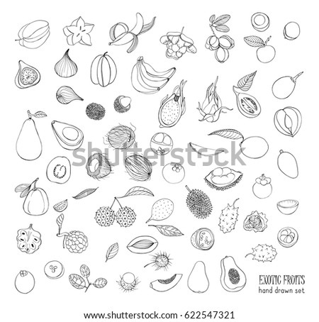 exotic tropical fruits hand drawn set collection of whole fruit and cutaway avocado