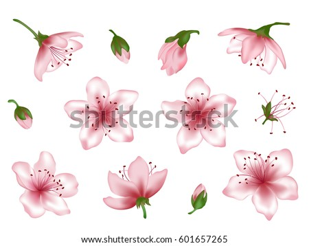 Extended spring flower blossom vector illustration set. Pink blooming cherry, peach, apple or apricot design elements. Bloom flower collection, vector tree blossom elements with pink petals. Bud icon.