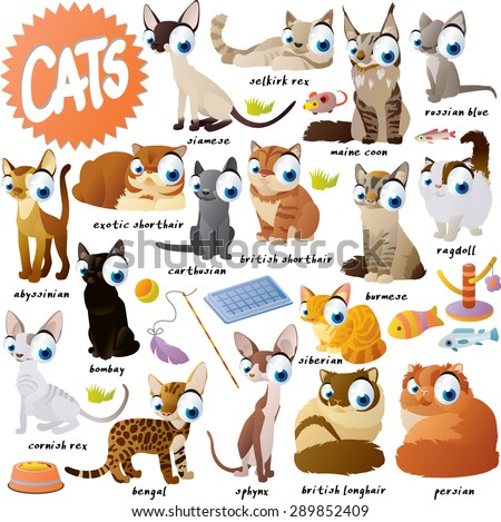 extra big set of cat breeds - stock vector