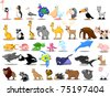 Extra large set of animals including , kangaroo, giraffe, elephant, camel, - stock vector
