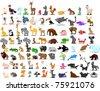 Extra large set of animals including lion, kangaroo, giraffe, elephant, camel, antelope, hippo, tiger, zebra, rhinoceros - stock photo