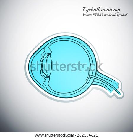 eyeball cut anatomy medicine icon color outline vector illustration - stock vector