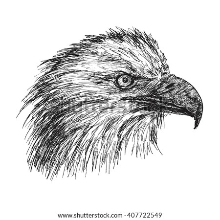 how to draw a eagle face