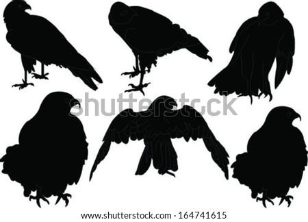 falcon collection - vector - stock vector