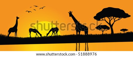 family of giraffes playing by the river - stock vector